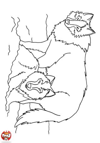 Coloriage: Les loups
