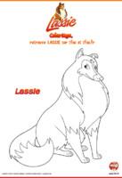LASSIE_Lassie, la chienne fidèle de Zoé.