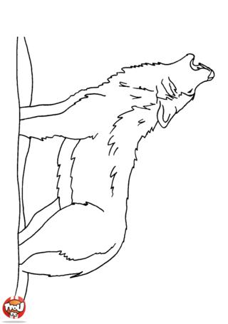 Coloriage: Loup qui hurle