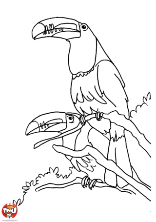 Coloriage: Toucan