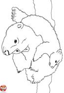 Ours polaire et son bébé