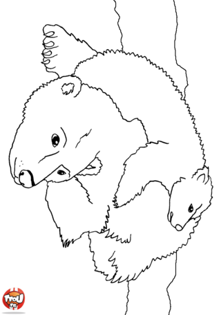Coloriage: Ours polaire et son bébé