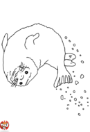 Phoque qui fait des bulles