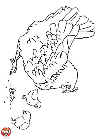 Coloriage: Poule et ses poussins