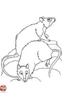 Deux rats