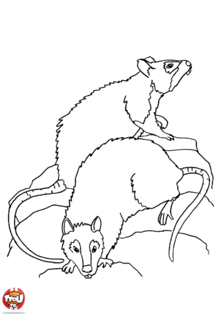 Coloriage: Deux rats