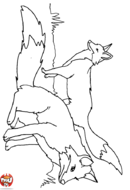 Deux renards