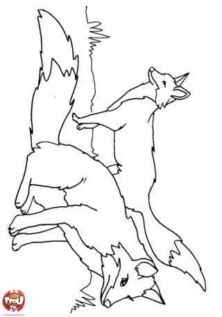 Coloriage: Deux renards