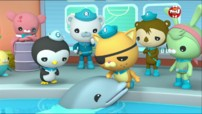 Les octonauts et le bébé dauphin - Octonauts
