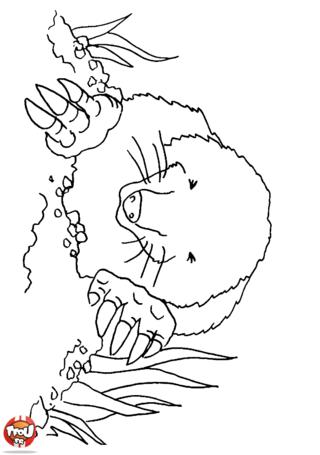 Coloriage: Taupe qui sort de son terrier