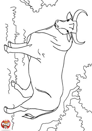 Coloriage: Taureau