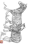 Deux zèbres