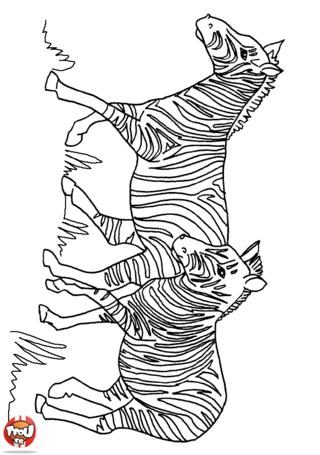 Coloriage: Deux zèbres