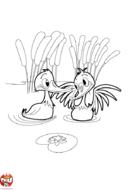Les canards barbotent