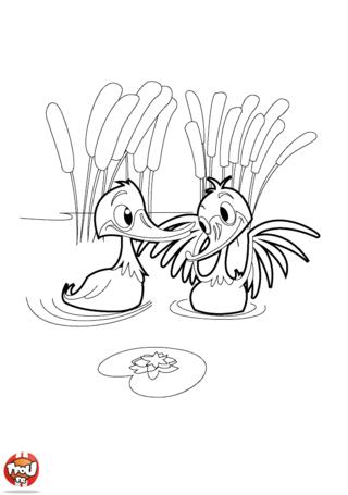 Coloriage: Les canards barbotent