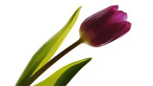 Coloriage Fleuriste