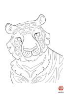 Coloriage le plus beau des tigres